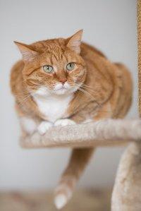 polecane produkty żywieniowe dla kotów
